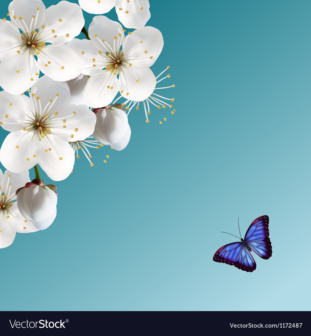 Cherry blossom and blue butterfly vector