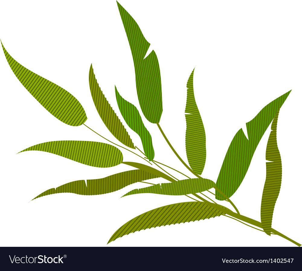 A plant vector
