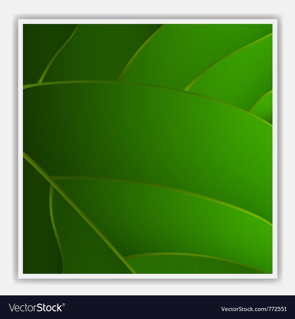Creative leaf background vector