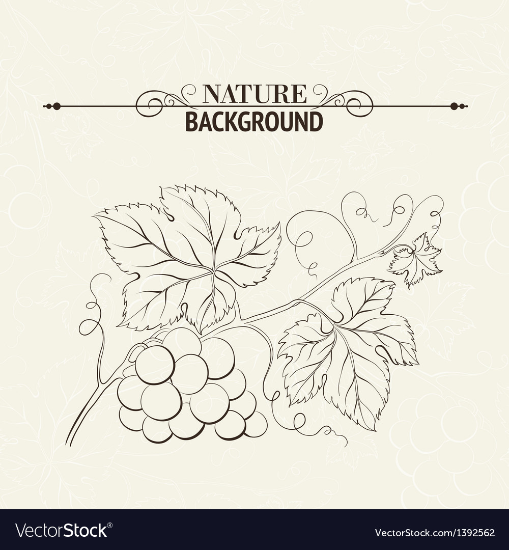 Green wine leaves vector