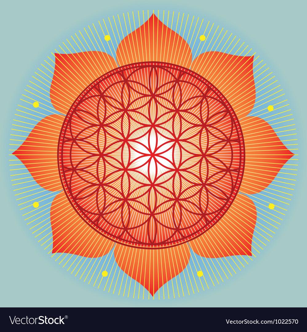 Sacred geometry flower of life orange mandala vector