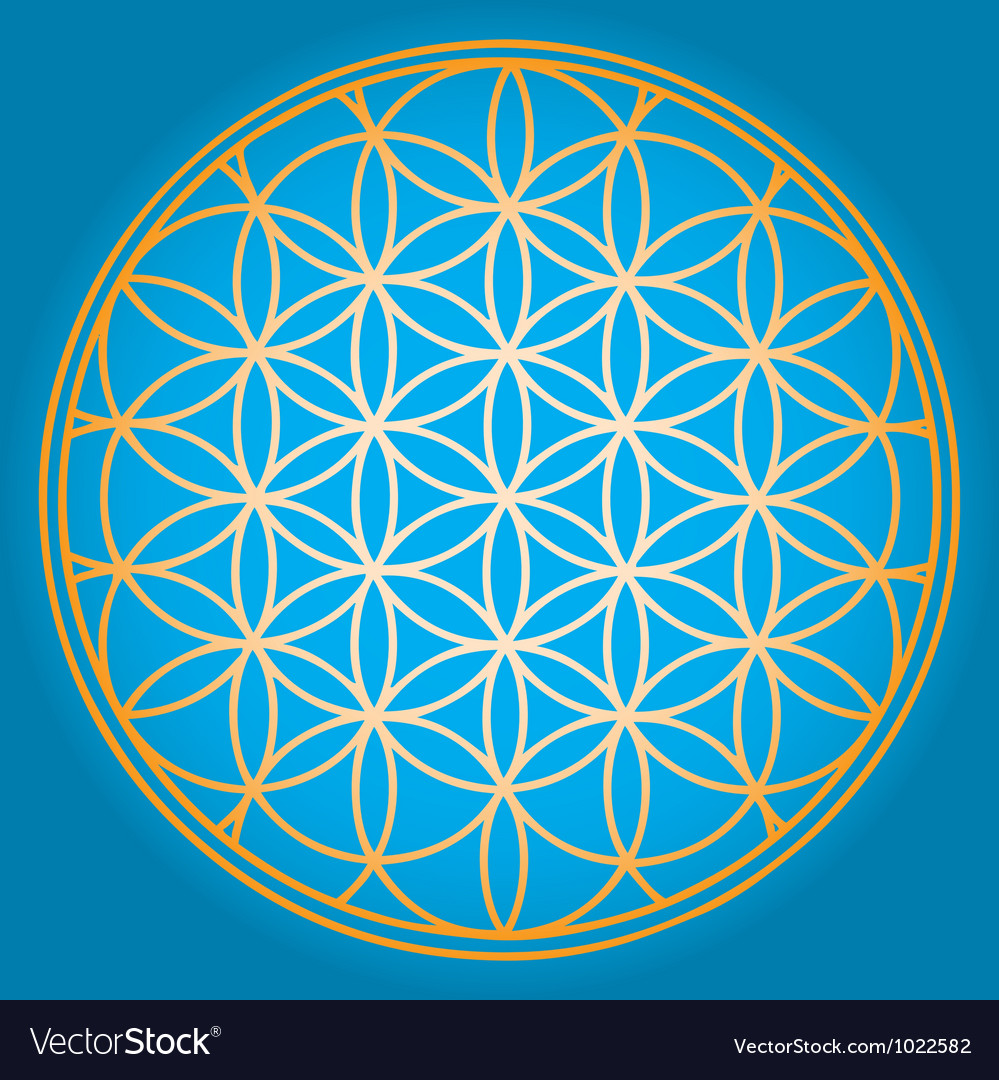 Sacred geometry flower of life vector