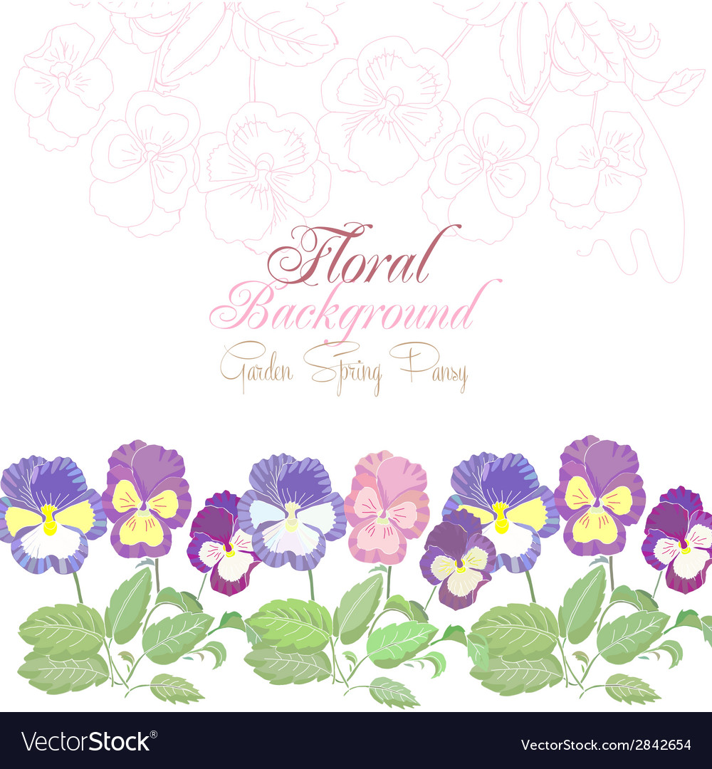 Floral background with spring pansies vector
