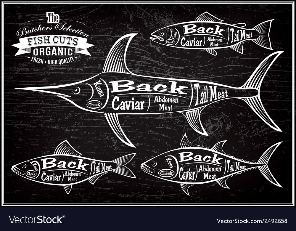 Diagram cut carcasses salmon swordfish herring tun vector