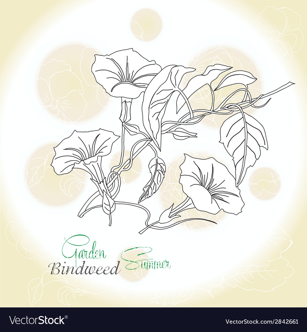 Ochre background with bindweed vector