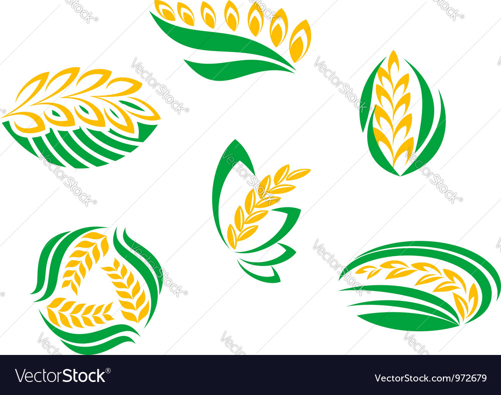 Symbols of cereal plants vector