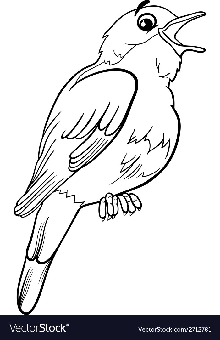 Nightingale bird coloring page vector