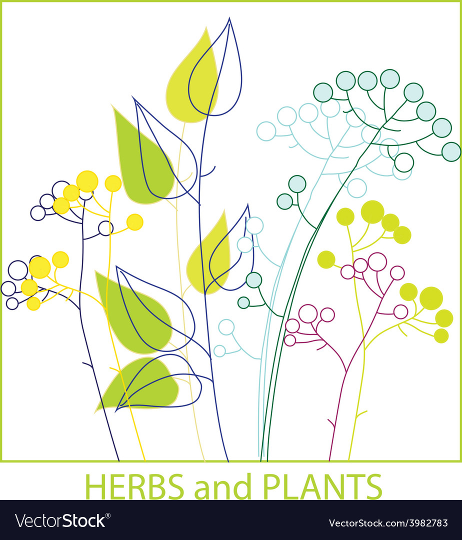 Twigs herbs and plants vector