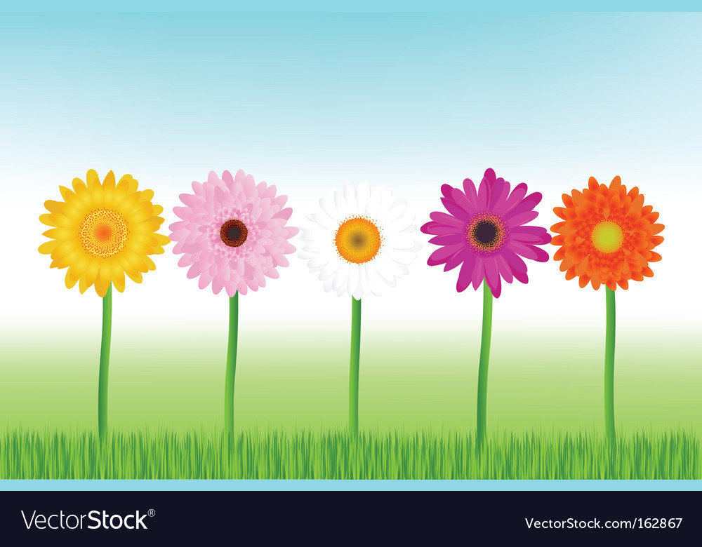 Colorful daisies vector
