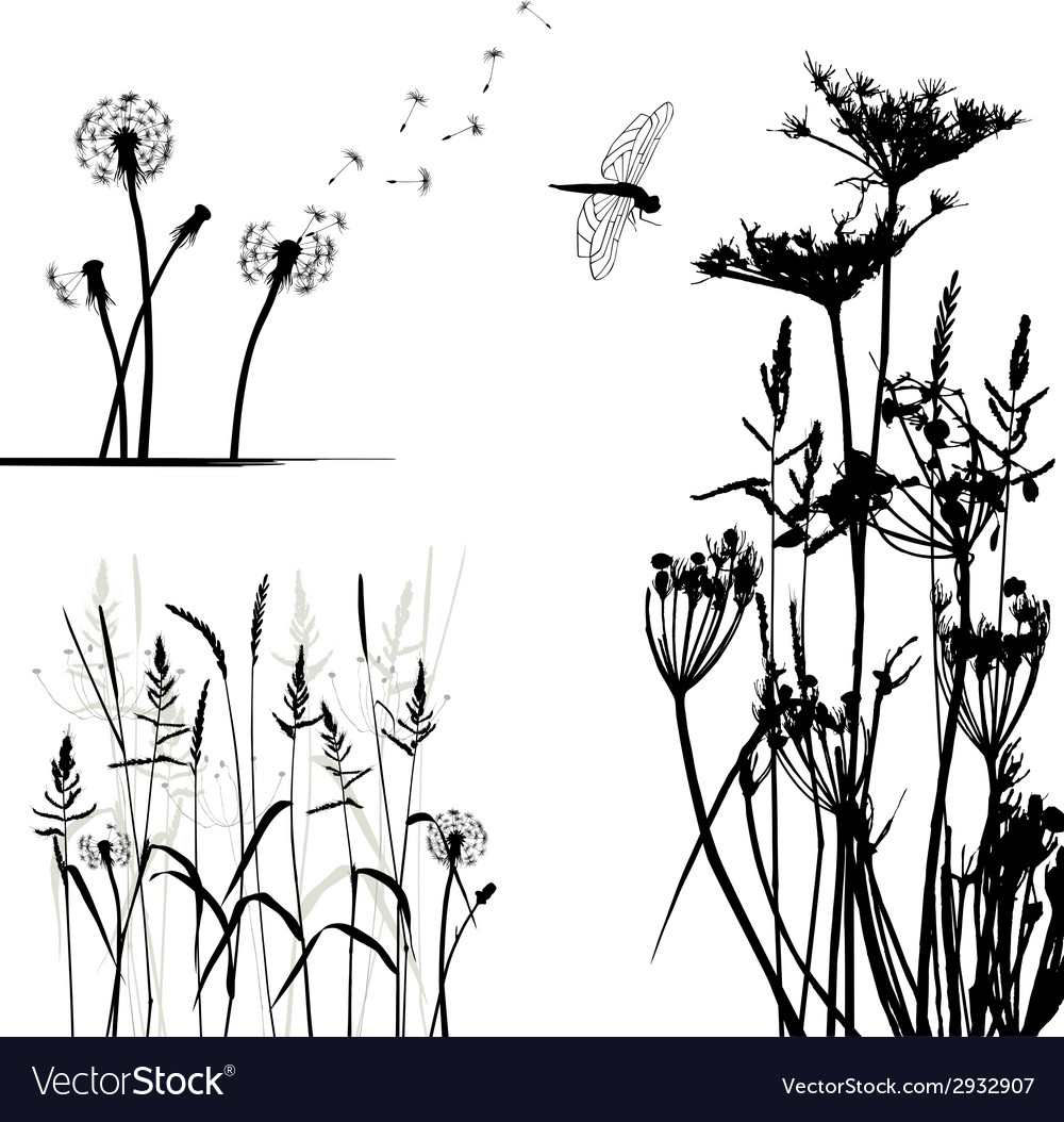 Wild plant and dragonfly vector