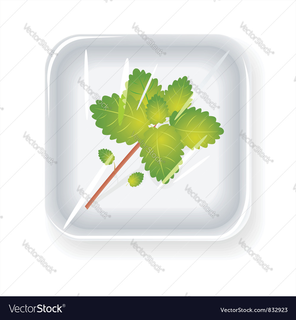 Package with mint vector