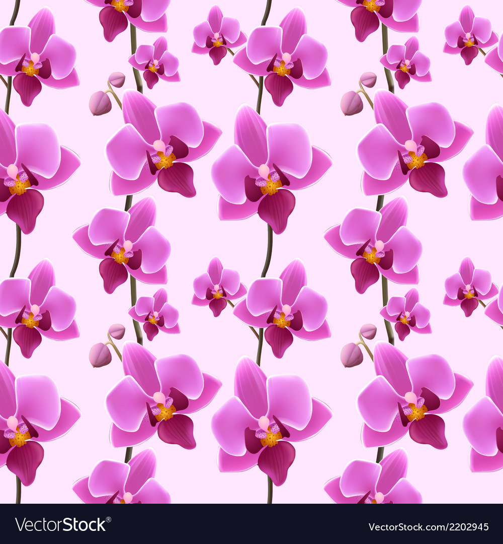 Orchid blossom seamless pattern vector