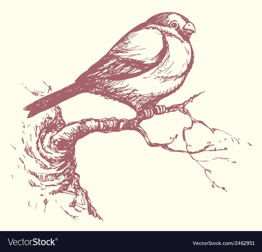 Bullfinch vector