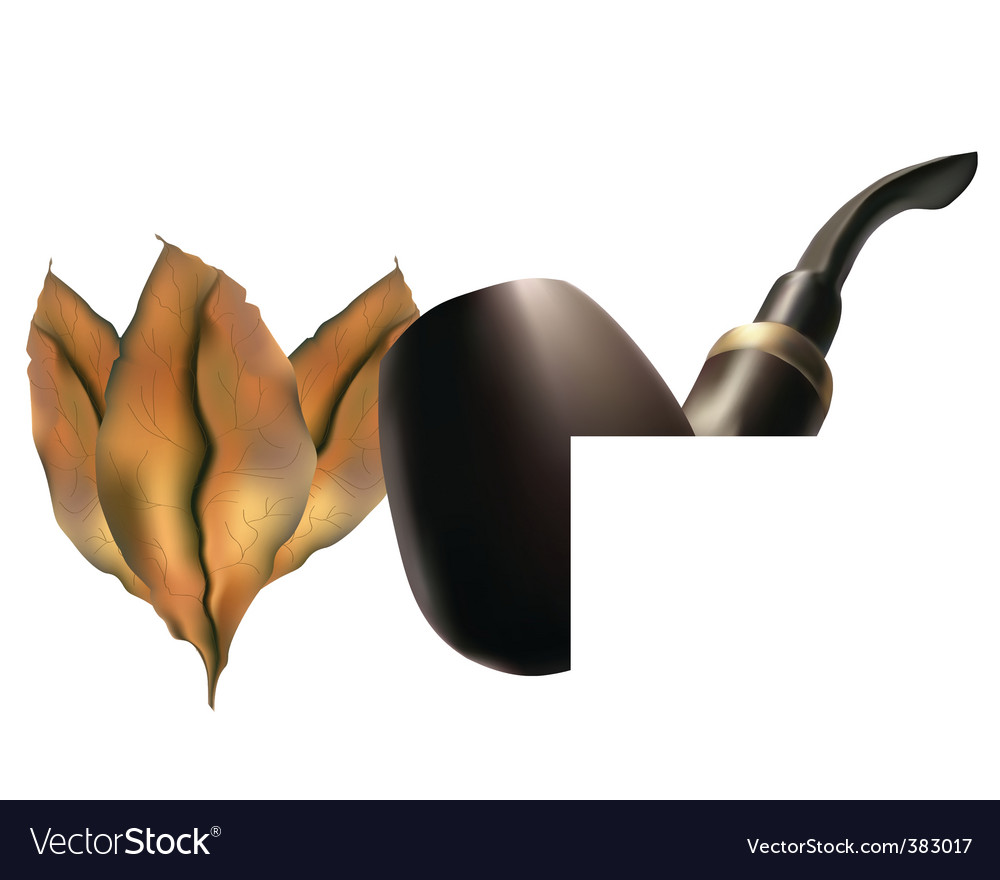 Pipe with tobacco leaves vector