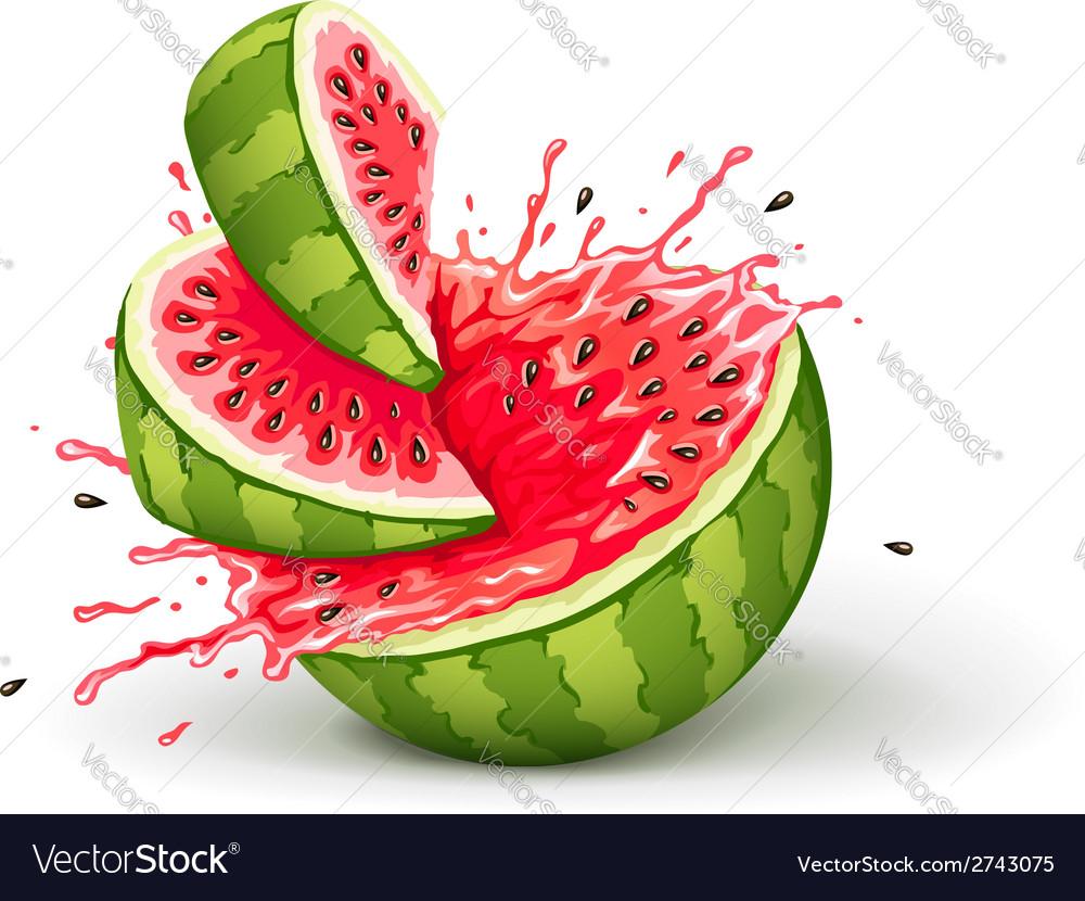 Juicy ripe watermelon cuts vector
