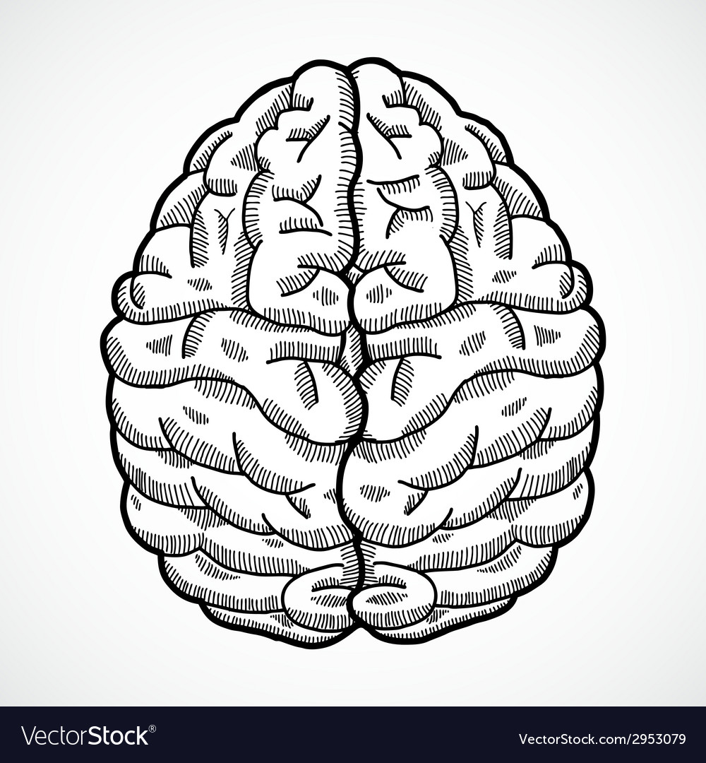 Human brain sketch vector