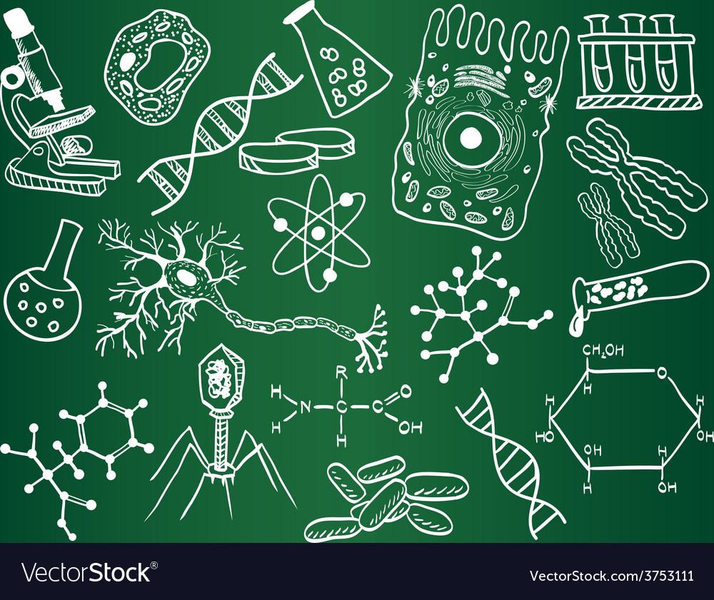 Biology sketches on school board vector