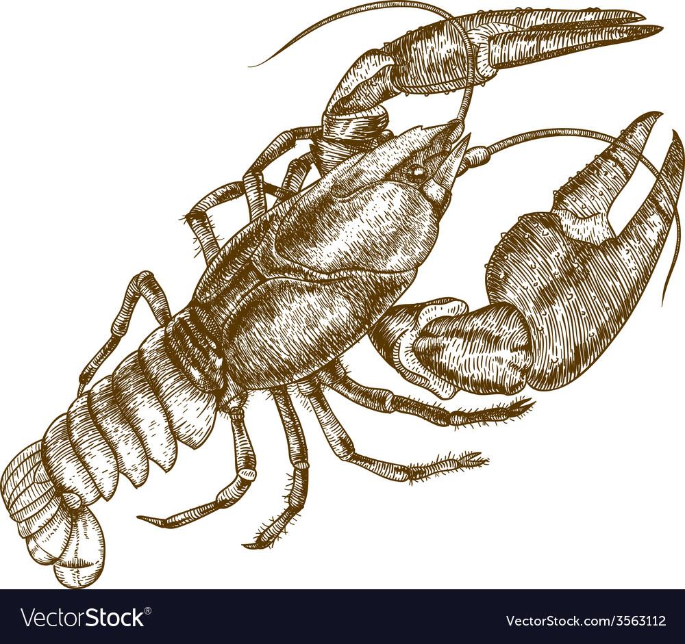 Engraving crayfish vector