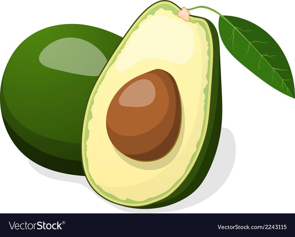 Avocado isolated on white background vector