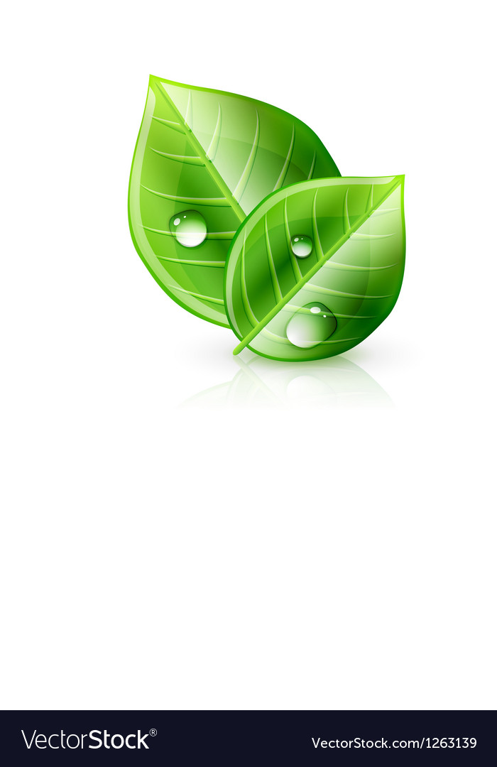 Green leaf ecology concept vector
