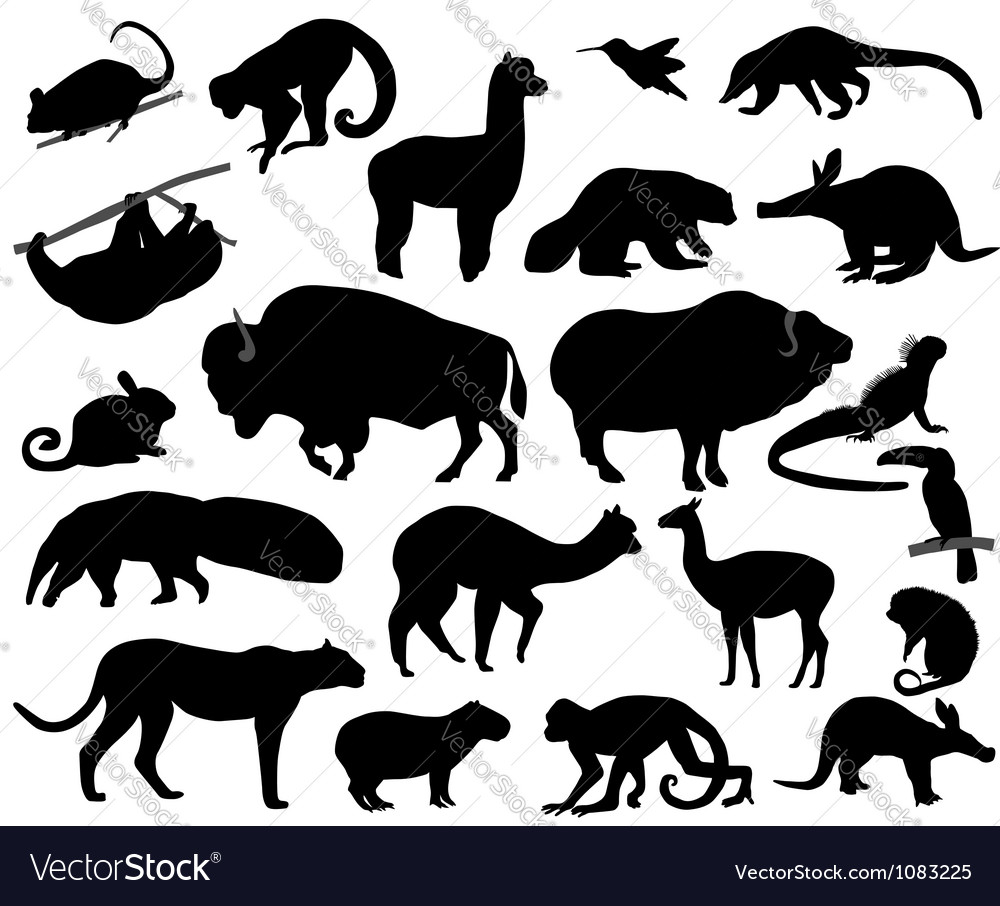 Animals of north and south america vector