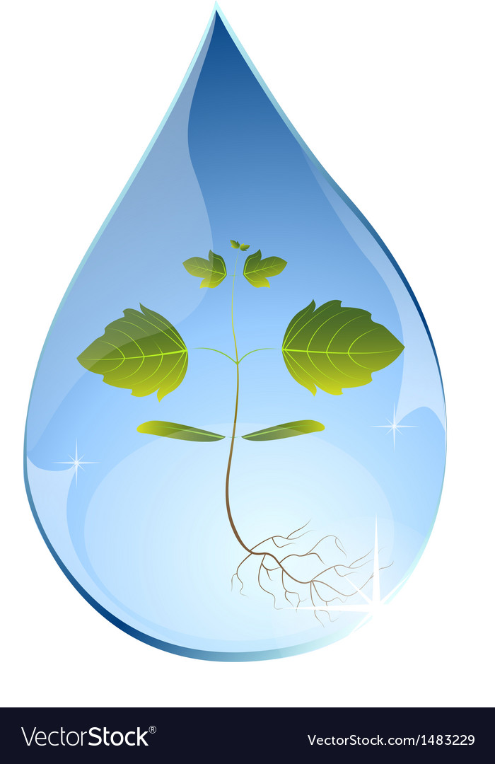 Tree sprout in water drop vector