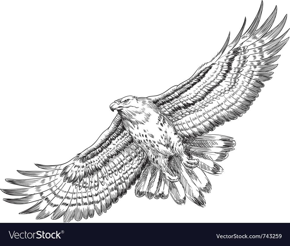 Hand drawn hawk vector