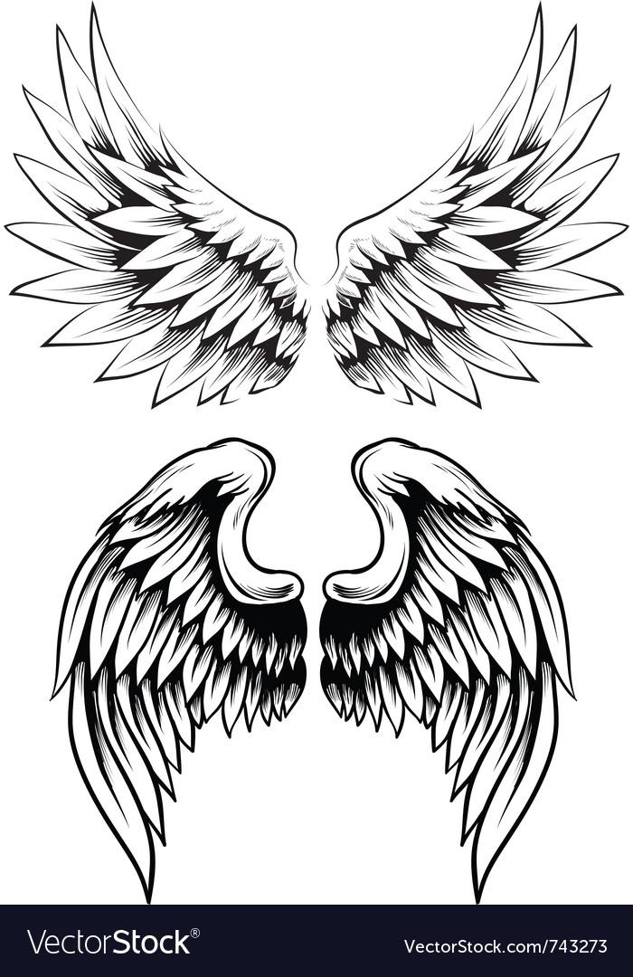 Hand drawn wing set vector