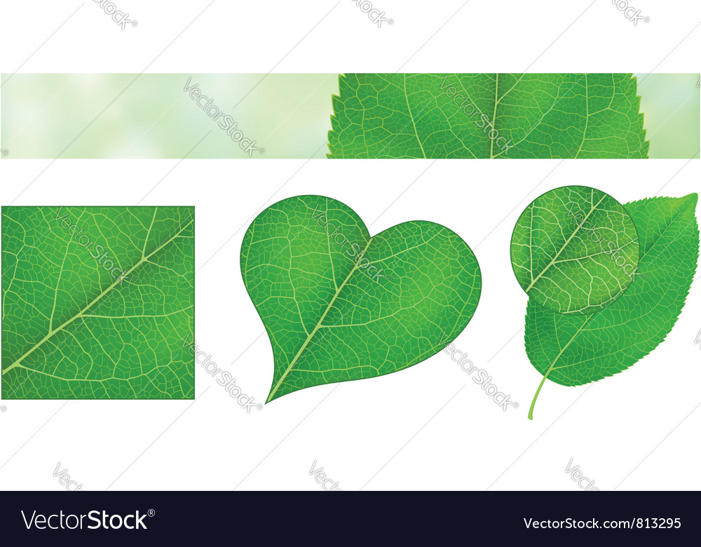 Green leaf texture vector