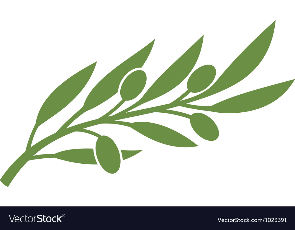 Green olive branch symbol vector