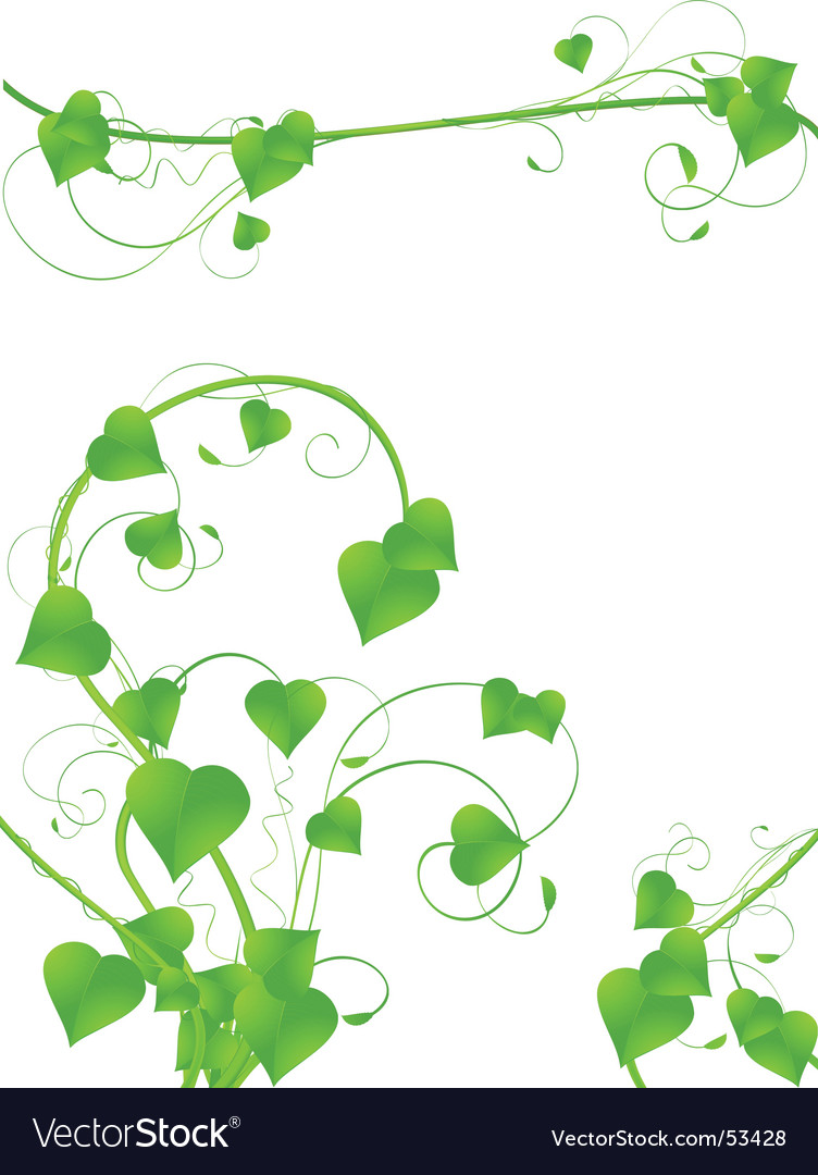 Vine designs vector