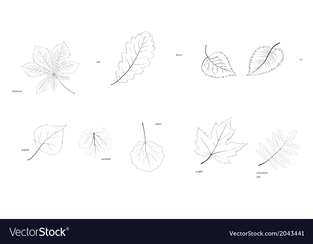 Laves of trees vector