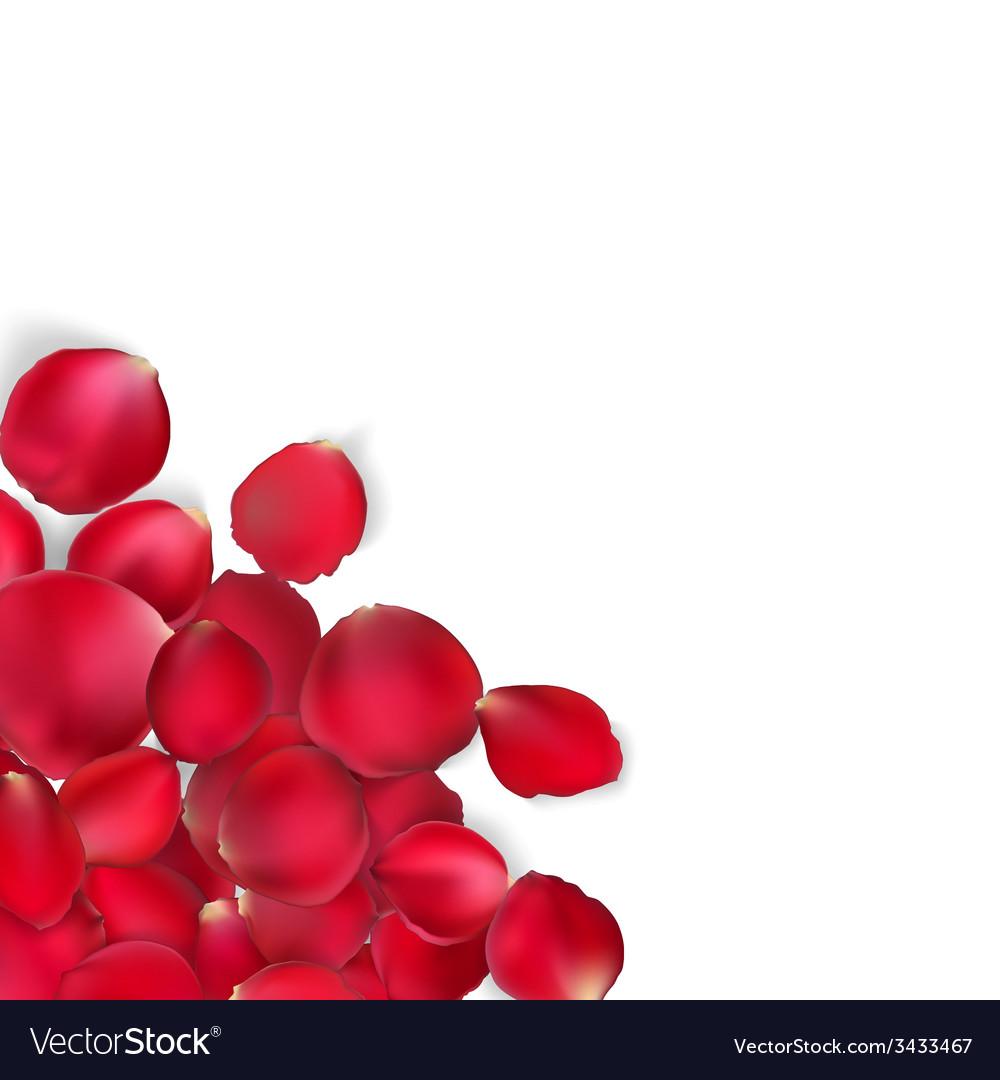 Valentine card - red rose petals eps 10 vector