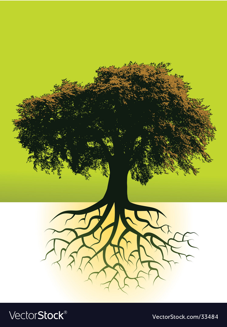 Trees roots vector