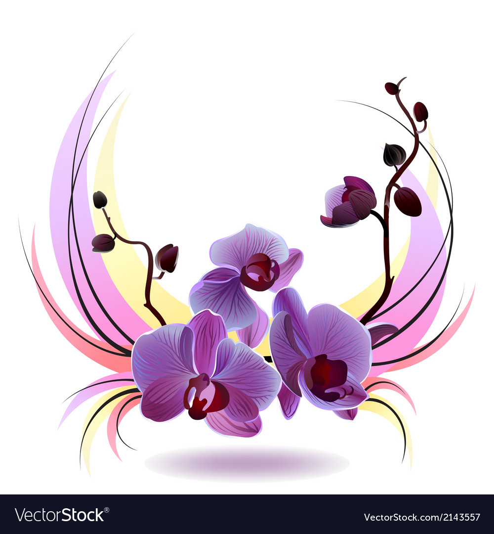 Greeting card with orchids bouquet vector