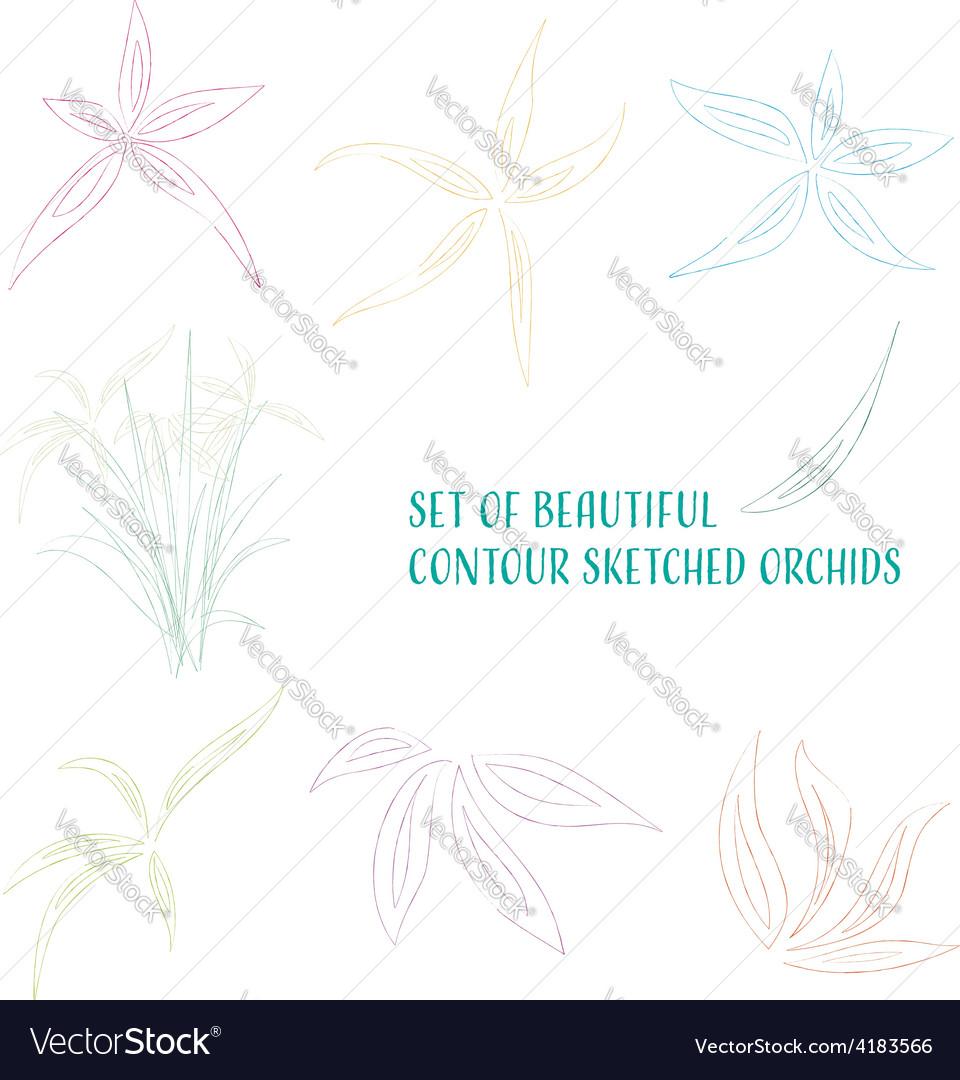 Contour sketched flowers vector