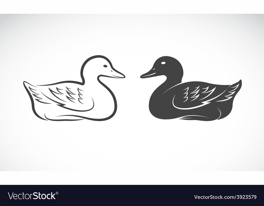 Image of an duck vector