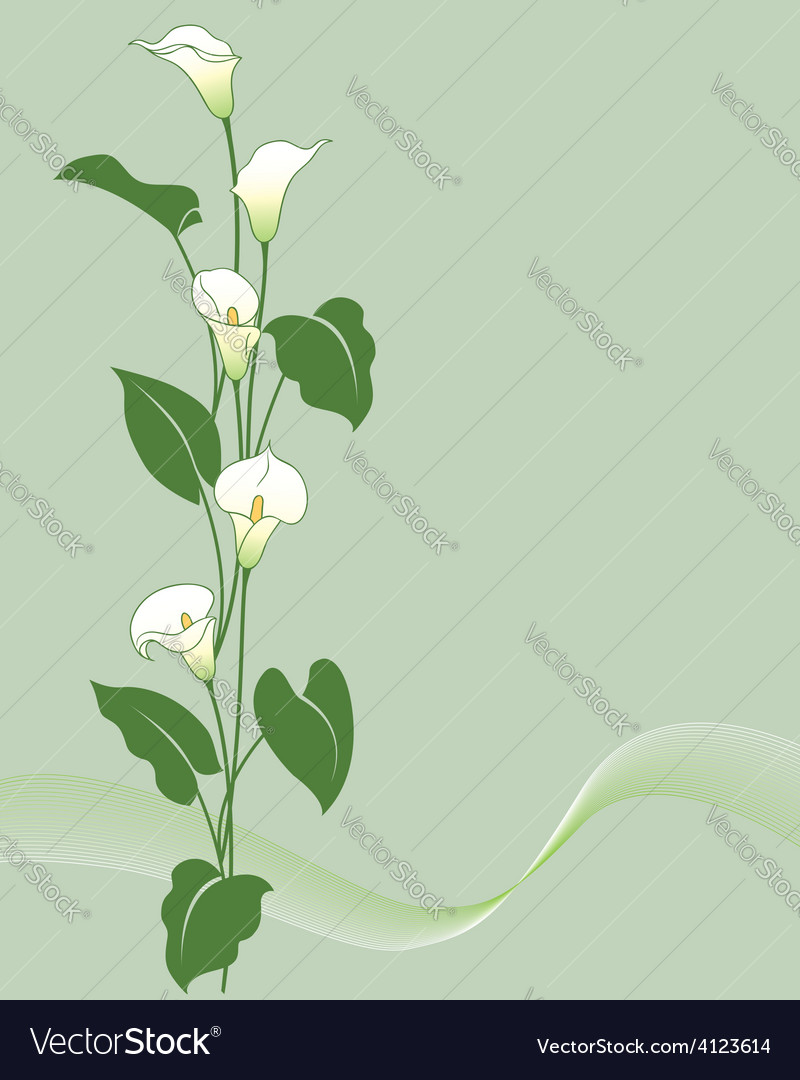 Calla bouquet vector