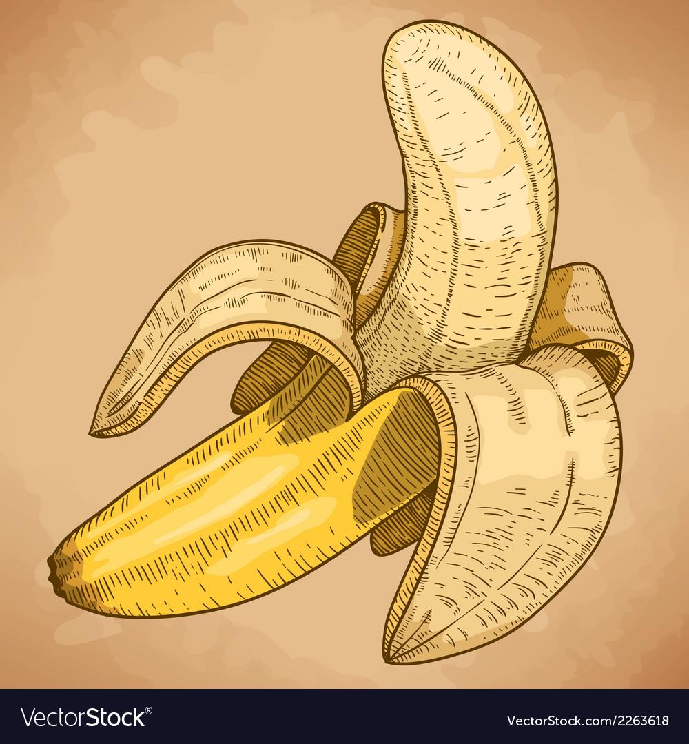 Engraving banana retro vector
