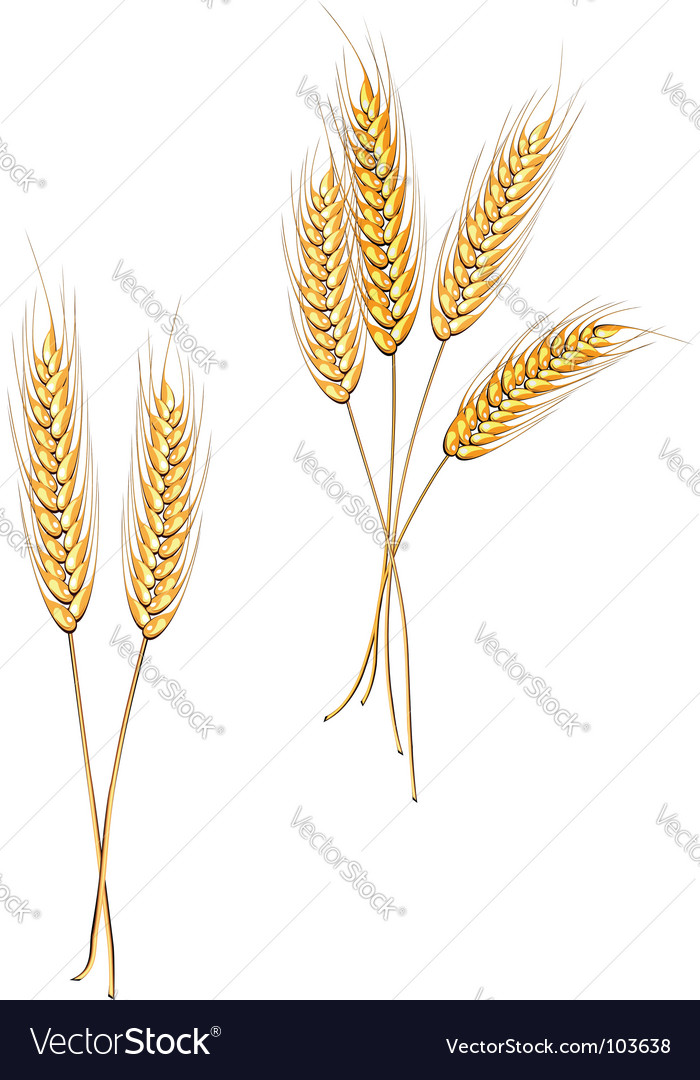 Agriculture symbols vector