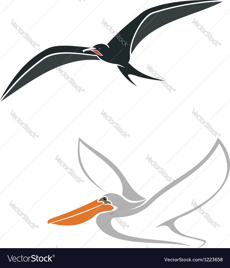 Albatross and pelican birds symbols vector