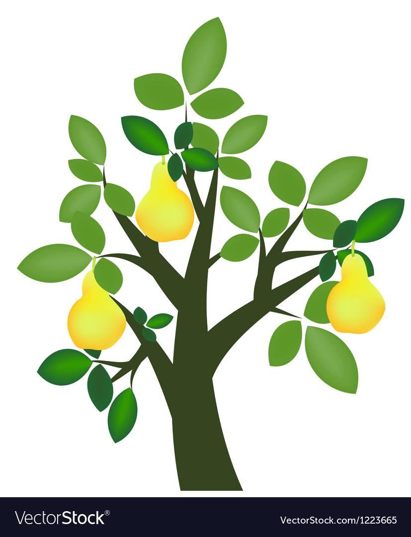 Decorative pear tree vector