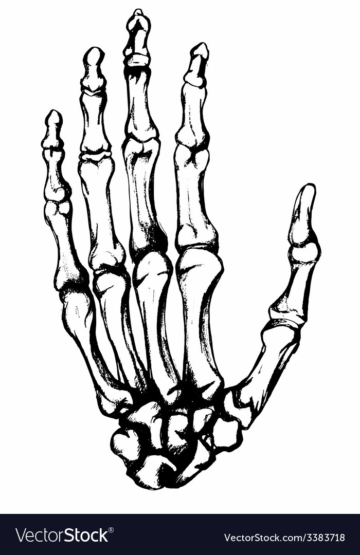 Hand drawn hand bones vector