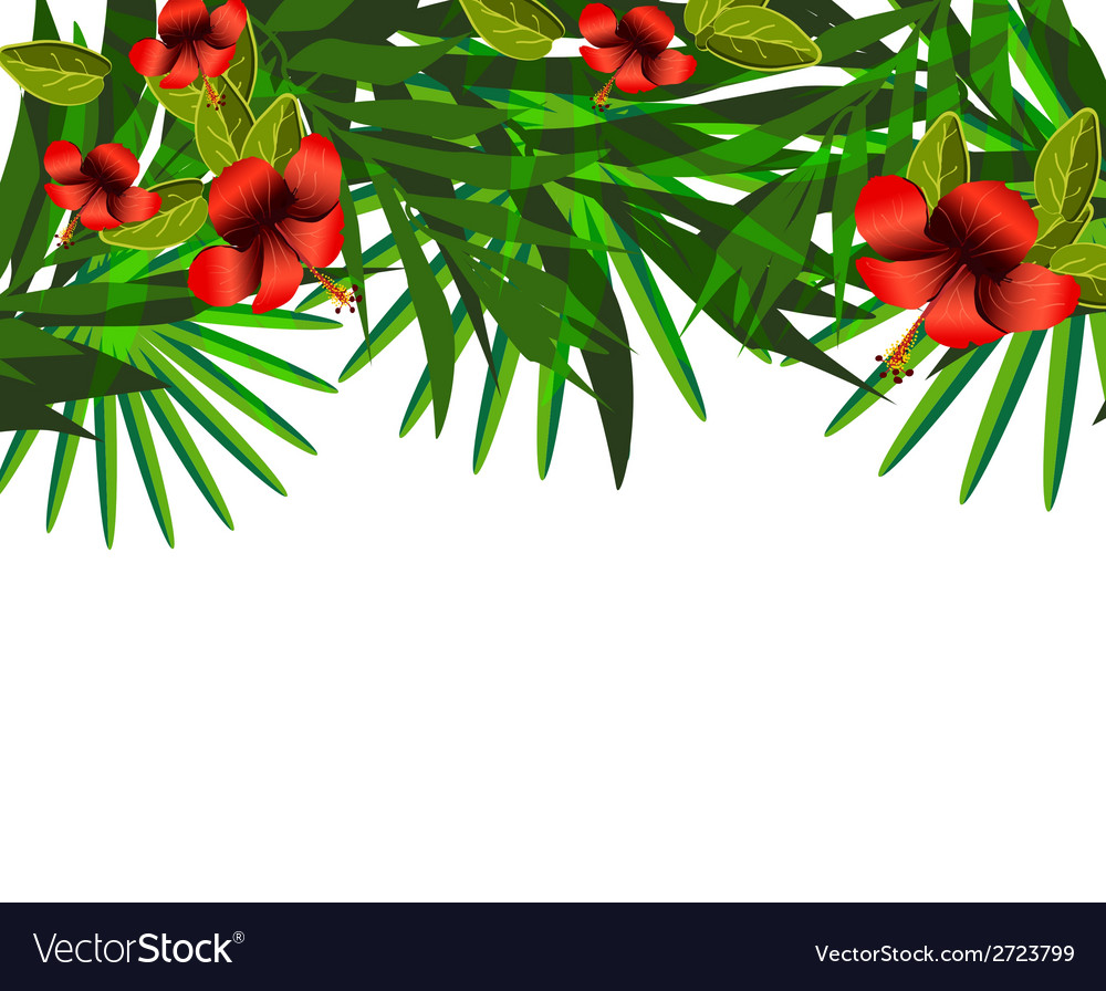 Tropical flowers and leaves over white vector