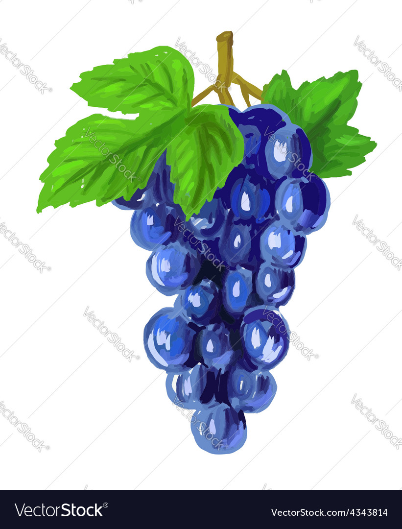 Picture of red grapes vector