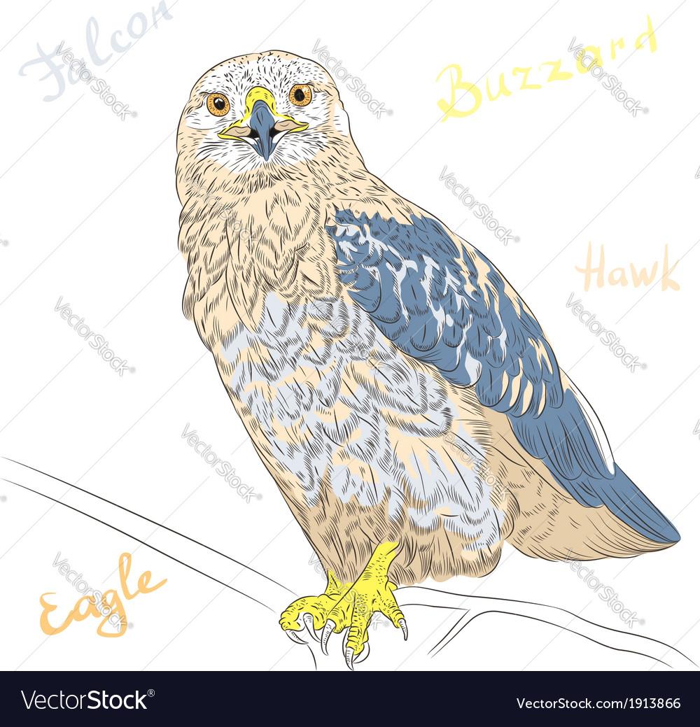 Cartoon colorful bird rough-legged buzzard vector