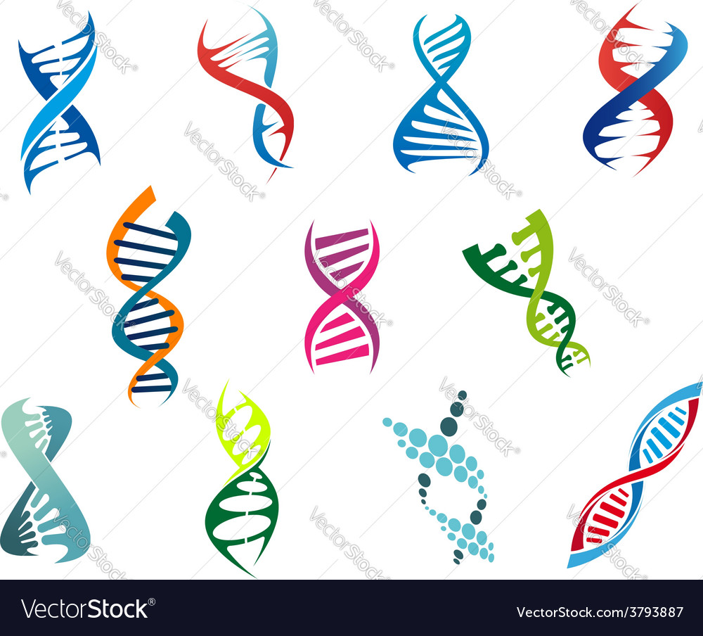 Dna molecules and symbols vector