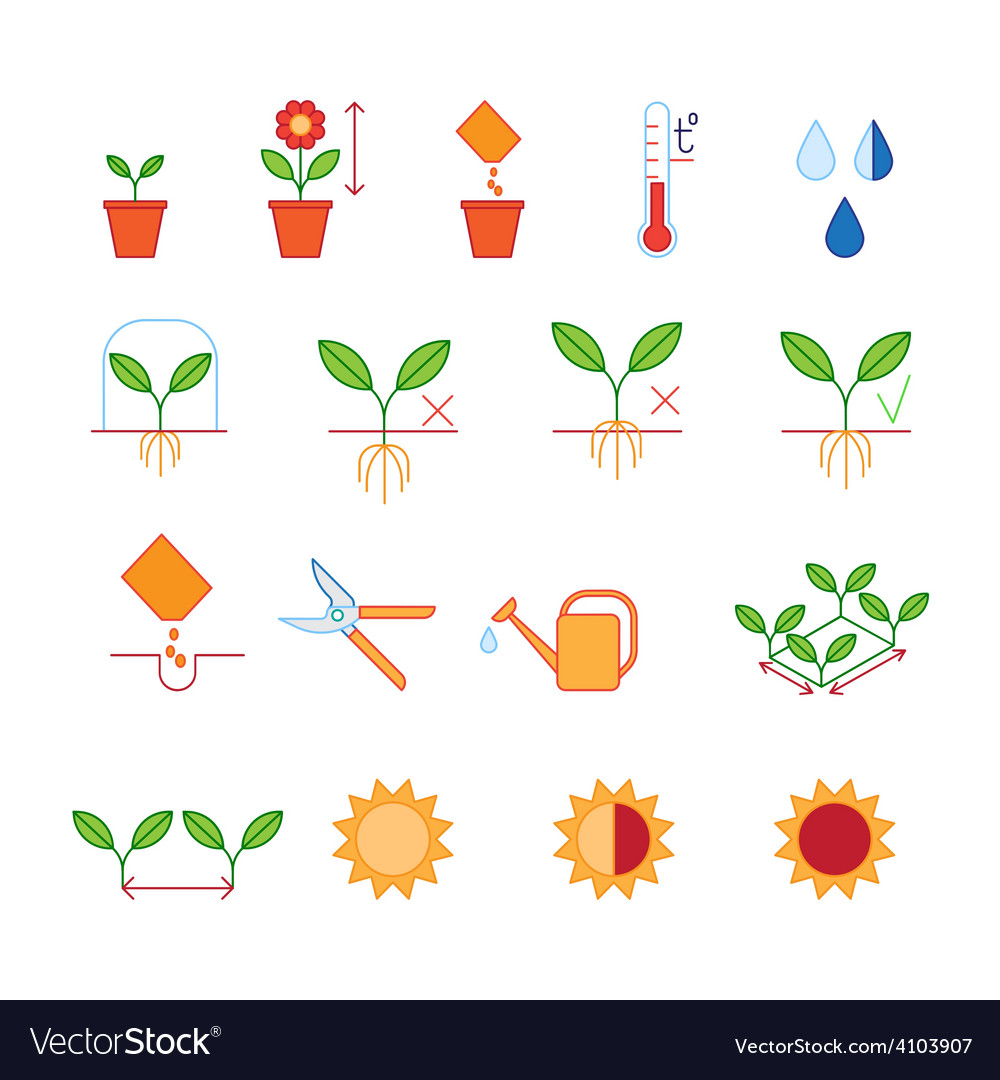 Seeding  planting instructions steps pruning vector
