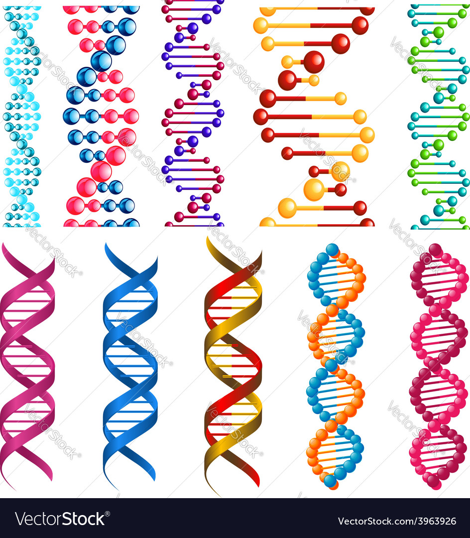 Colorful dna molecules and cells vector