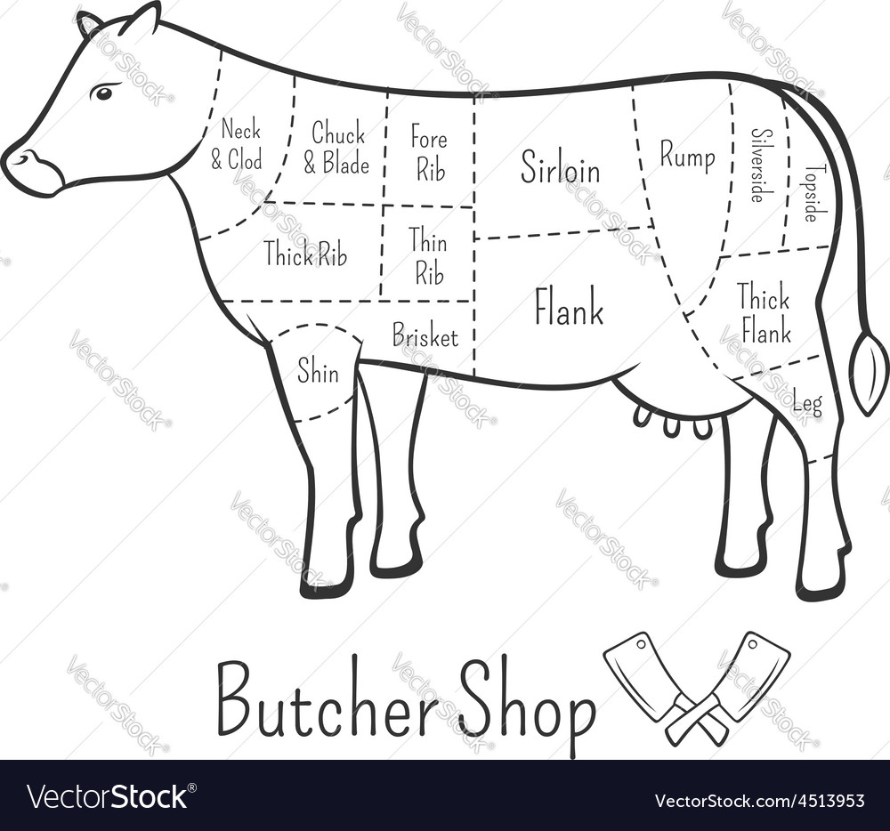 British cuts of beef diagram and butchery design vector